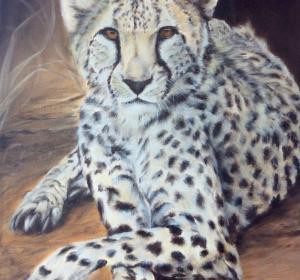 Gepard→