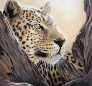 Leopard→