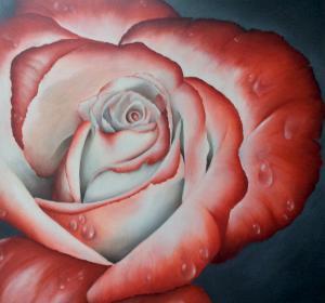 Rose→