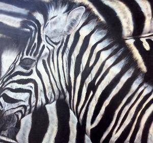 Zebras→